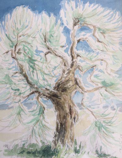 Olivenbaum, Aquarell, 27x34